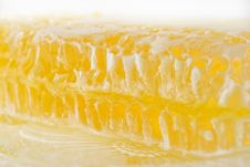 Free Acacia Honeycomb Stock Photos - 3293173