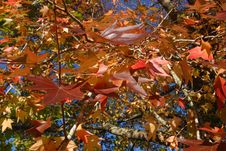 Free Colorful Autumn Leaves Royalty Free Stock Photo - 3293425