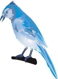 Free Blue Bird Royalty Free Stock Photos - 3294628