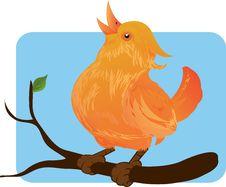 Free Cute Bird Royalty Free Stock Photo - 3294645