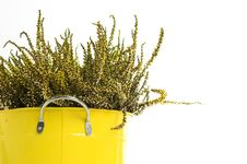 Free Tin Pot Heathers Royalty Free Stock Photos - 3294758