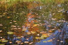 Small Pond In Autumn Royalty Free Stock Photos