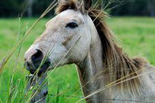 Free Horse 5 Stock Photography - 3295232