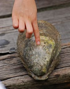 Free Sea Shell In The Fish Farm Stock Image - 3295631