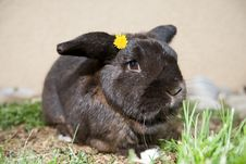 Cute Bunny With Flower Stock Image