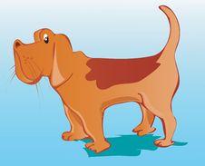 Pet Dog Royalty Free Stock Photo