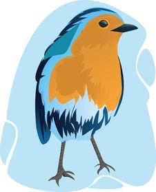 Free Beautiful Bird Stock Images - 3296664