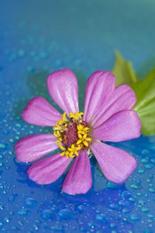Free Close-up Of Pink Flower Royalty Free Stock Photo - 3296845