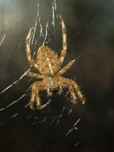 Free Spider And Web Stock Photography - 3297292