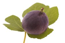 Figs On The Leaf Stock Photography