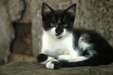 Free Black And White Kitten Stock Images - 3298014