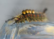Free Colorful Caterpillar Royalty Free Stock Images - 3298209