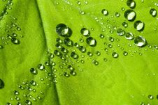 Water Drops On The Leafs Stock Photography