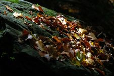 Free Autumn Leaves Royalty Free Stock Photography - 3299387