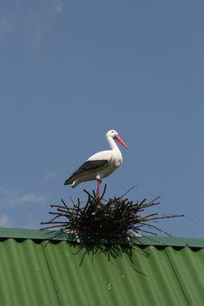 Free Stork On Nest Royalty Free Stock Image - 3299456