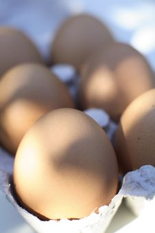 Organic Freerange Eggs Stock Image