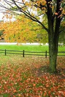 Bright Autumn Scene Stock Image