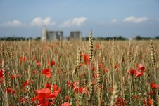 Free Poppies, Wheat And A Ruin Stock Images - 3299694