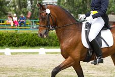 Free Dressage Horse Stock Photo - 32923630