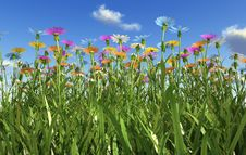 Free Flowers Of Different Colors, In A Grass Field. Stock Photos - 32968773