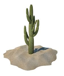 Free Cactus Plant On Sand, Isolated. Stock Image - 32969111