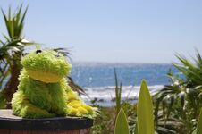 Free The Frog And The Sea Royalty Free Stock Photo - 32969185