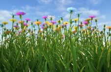Flowers Of Different Colors, In A Grass Field. Stock Photo
