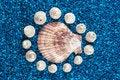 Free Oister And Seashells Aranged On Blue Background Stock Photo - 32997230
