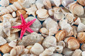 Free Starfish On Seashells And Oisters Royalty Free Stock Images - 32997239