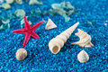 Free Starfish And Seashell On Blue Sand Royalty Free Stock Photos - 32997608