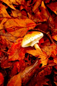 Free Leaves Autumn Royalty Free Stock Photography - 32990127