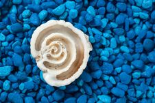 Free Seashell Section Closeup On Blue Background Stock Photos - 32997273