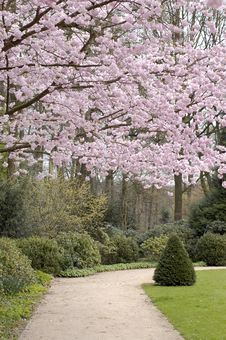 Free Park With A Beautiful Blossom Trees Stock Photography - 32998062