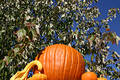 Free Pumpkins On A Ledge Royalty Free Stock Photos - 334458
