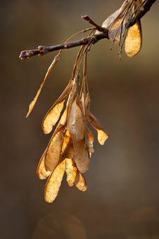 Free Autumn Semitones Stock Photography - 332762