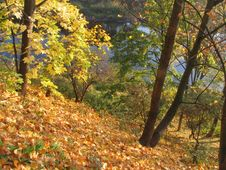 Free Autumn Maple Above The River Stock Photo - 333190