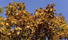 Free Autumn Foliage Stock Photography - 333622