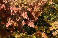 Free Autumn Foliage Stock Photos - 333623