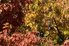 Free Autumn Foliage Royalty Free Stock Photo - 333625