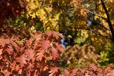 Free Autumn Foliage Royalty Free Stock Image - 333626