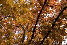 Free Autumn Foliage Stock Image - 333641