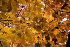 Free Autumn Foliage Stock Photography - 333642