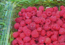 Free Raspberries Picked Today. Stock Image - 334181