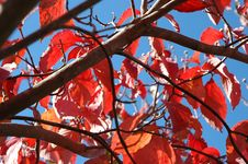 Fall Is Here! Royalty Free Stock Images
