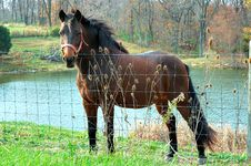 Free Horse By The Pond Royalty Free Stock Image - 335506