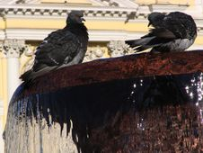 Free Pigeons On A Fountain Stock Photography - 338192