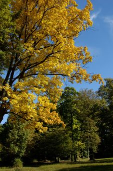 Free Autumn Colours Royalty Free Stock Photography - 339417