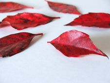 Free Fallen Red Leaves Royalty Free Stock Photo - 339465