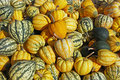 Free Gourds Stock Photography - 3301992