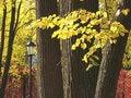 Free Autumnal Park 3 Royalty Free Stock Photo - 3303285